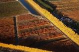 aerial;aerial-photo;aerial-photograph;aerial-photographs;aerial-photography;aerial-photos;aerial-view;aerial-views;aerials;autuminal;autumn;autumn-colour;autumn-colours;autumnal;Central-Otago;color;colors;colour;colours;country;countryside;Cromwell;crop;crops;deciduous;fall;farm;farming;farmland;farms;field;fruit;fruit-tree;fruit-trees;horticulture;irrigation-pond;irrigation-ponds;N.Z.;New-Zealand;NZ;orange;Orchard;orchards;Otago;pattern;patterns;pond;ponds;poplar;poplar-tree;Poplar-Trees;poplars;Ripponvale;row;rows;rural;S.I.;season;seasonal;seasons;shape;shapes;SI;South-Is.;South-Island;tree;trees