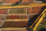 aerial;aerial-photo;aerial-photograph;aerial-photographs;aerial-photography;aerial-photos;aerial-view;aerial-views;aerials;autuminal;autumn;autumn-colour;autumn-colours;autumnal;Central-Otago;color;colors;colour;colours;country;countryside;Cromwell;crop;crops;deciduous;fall;farm;farming;farmland;farms;field;fruit;fruit-tree;fruit-trees;horticulture;N.Z.;New-Zealand;NZ;orange;Orchard;orchards;Otago;pattern;patterns;poplar;poplar-tree;Poplar-Trees;poplars;Ripponvale;row;rows;rural;S.I.;season;seasonal;seasons;shape;shapes;SI;South-Is.;South-Island;tree;trees