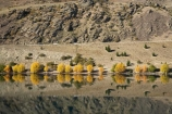 autuminal;autumn;autumn-colour;autumn-colours;autumnal;calm;Central-Otago;color;colors;colour;colours;Cromwell-Gorge;deciduous;Dunstan-Mountains;fall;lake;Lake-Dunstan;lakes;N.Z.;New-Zealand;NZ;Otago;placid;quiet;reflection;reflections;S.I.;season;seasonal;seasons;serene;SI;smooth;South-Is.;South-Island;State-Highway-8;State-Highway-Eight;still;tranquil;tree;trees;water