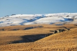 altitude;back-country;backcountry;Central-Otago;Central-Otago-peneplain;country;countryside;high-altitude;high-country;highcountry;highland;highlands;Lammermoor-Range;Lammermoor-Ranges;Maniototo;mount;mountain;mountainous;mountains;mt;mt.;N.Z.;New-Zealand;NZ;Old-Dunstan-Road;Old-Dunstan-Track;Old-Dunstan-Trail;Otago;Otago-peneplain;range;ranges;remote;remoteness;road;roads;Rock-and-Pillar-Range;rural;S.I.;SI;snow;snow-capped;snow_capped;snowcapped;snowy;South-Is.;South-Island;tussock;tussocklands;tussocks;uiplands;upland;uplands