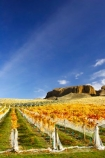 agricultural;agriculture;autuminal;autumn;autumnal;bannockburn;bannockburn-sluicings;bird-nets;bird-netting;Central-Otago;central-otago-vineyard;central-otago-vineyards;central-otago-wineries;central-otago-winery;color;colors;colour;colours;country;countryside;cromwell;crop;crops;cultivation;deciduous;erosion;fall;farm;farming;farmland;farms;field;fields;gold;gold-rush;gold-workings;golden;grape;grapes;grapevine;horticulture;leaf;leaves;Mt-Difficulty-Vineyard;net;nets;netting;New-Zealand;orange;row;rows;rural;sluicing;sluicings;south-island;tailing;tailings;tree;trees;vine;vines;vineyard;vineyards;vintage;wine;wineries;winery;wines;yellow