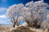 agricultural;agriculture;beautiful;calm;calmness;Central-Otago;Central-Otago-Rail-Trail;clean;clear;cold;Coldness;Color;Colour;country;countryside;Daytime;Exterior;farm;farming;farmland;farms;field;fields;freeze;freezing;freezing-fog;frost;Frosted;frosty;high-country;hoar-frost;hoar-frosts;Hoarfrost;hoarfrosts;ice;ice-crystals;icy;Ida-Valley;idyllic;Landscape;Landscapes;Maniototo;meadow;meadows;N.Z.;natural;Nature;new-zealand;NZ;Otago;Otago-Central-Rail-Trail;Oturehua;Outdoor;Outdoors;Outside;paddock;paddocks;pasture;pastures;peaceful;Peacefulness;phenomena;phenomenon;pure;Quiet;Quietness;rail-trail;rail-trails;rime;rime-ice;rural;S.I.;Scenic;Scenics;Season;Seasons;SI;silence;south-island;spectacular;stunning;tranquil;tranquility;tree;trees;view;water;weather;White;willow;willow-tree;willow-trees;willows;winter;Wintertime;wintery;wintry