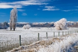 agricultural;agriculture;beautiful;calm;calmness;Central-Otago;clean;clear;cold;Coldness;Color;Colour;country;countryside;Daytime;Exterior;farm;farming;farmland;farms;fence;fence-line;fence-lines;fence_line;fence_lines;fenceline;fencelines;fences;field;fields;freeze;freezing;freezing-fog;frost;Frosted;frosty;high-country;hoar-frost;hoar-frosts;Hoarfrost;hoarfrosts;ice;ice-crystals;icy;Ida-Valley;idyllic;Landscape;Landscapes;Maniototo;meadow;meadows;N.Z.;natural;Nature;new-zealand;NZ;Otago;Outdoor;Outdoors;Outside;paddock;paddocks;pasture;pastures;peaceful;Peacefulness;phenomena;phenomenon;Poolburn;poplar;poplar-tree;poplar-trees;poplars;pure;Quiet;Quietness;rime;rime-ice;rural;S.I.;Scenic;Scenics;Season;Seasons;SI;silence;south-island;spectacular;stunning;tranquil;tranquility;tree;trees;view;water;weather;White;willow;willow-tree;willow-trees;willows;winter;Wintertime;wintery;wintry
