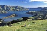 agriculture;coastal;farm;farmer;farming;farms;fence;fenceline;field;fields;grass;green;harbor;harbors;harbours;lamb;lambs;lush;meadow;meadows;paddock;paddocks;pasture;pastures;rural;sheep;spring;verdant;wool