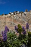 Aotearoa;bluff;bluffs;Canterbury;Christchurch;cliff;cliff-top;cliff_top;cliffs;Clifftop;damage;damaged;danger;dangerous;earthquake;earthquake-damaged-building;earthquake-damaged-house;earthquake-damaged-houses;earthquakes;Echium;Echium-flower;Echium-flowers;Echiums;flower;flowers;home;homes;houses;Kinsey-Terrace;lavender;N.Z.;New-Zealand;NZ;purple;residence;residences;risk;South-Is;South-Island;Sth-Is;Sumner;violet