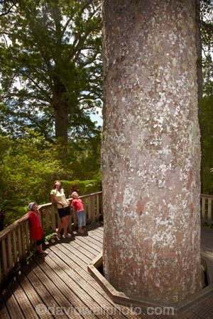309-Rd;309-Road;beautiful;beauty;boy;boys;brother;brothers;bush;child;children;Coromandel;Coromandel-Peninsula;endemic;families;family;forest;forests;girl;girls;Kauri-Forest;Kauri-Forests;Kauri-Grove;Kauri-Tree;Kauri-Trees;kid;kids;little-boy;little-boys;little-girl;little-girls;mother;N.I.;N.Z.;native;native-bush;native-tree;native-trees;natives;natural;nature;New-Zealand;NI;North-Is;North-Is.;North-Island;NZ;scene;scenic;sibling;siblings;sister;sisters;timber;tourism;tourists;tree;tree-trunk;tree-trunks;trees;trunk;trunks;Waiau;Waiau-Grove;Waikato;woman;wood;woods