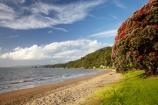 Bloom;coast;coastal;coastline;coastlines;coasts;Coromandel;Coromandel-Peninsula;crimson;flower;flowers;foreshore;metrosideros-excelsa;N.I.;N.Z.;New-Zealand;New-Zealand-Christmas-Tree;Ngarimu-Bay;NI;North-Is;North-Is.;North-Island;NZ;NZ-Christmas-Tree;ocean;plant;plants;pohutakawa;pohutakawas;pohutukawa;pohutukawa-flower;pohutukawa-flowers;Pohutukawa-Tree;pohutukawa-trees;pohutukawas;red;red-bloom;red-crimson;red-flower;red-flowers;sea;shore;shoreline;shorelines;shores;summer;Thames;Thames-Coast;Thornton-Bay;tree;trees;Waikato;water