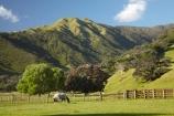 agricultural;agriculture;Coromandel;Coromandel-Peninsula;country;countryside;farm;farming;farmland;farms;fence;fence-line;fence-lines;fence_line;fence_lines;fenceline;fencelines;fences;field;fields;flower;flowers;horse;horses;meadow;meadows;metrosideros-excelsa;N.I.;N.Z.;New-Zealand;NI;North-Is;North-Is.;North-Island;NZ;paddock;paddocks;pasture;pastures;plant;plants;pohutakawa;pohutakawas;pohutukawa;pohutukawa-flower;pohutukawa-flowers;pohutukawa-tree;pohutukawa-trees;pohutukawas;Port-Jackson-Rd;Port-Jackson-Road;rural;tree;trees;Waikato