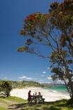 beach;beaches;coast;coastal;coastline;Coromandel;Coromandel-Peninsula;eating;flower;flowers;Kuaotunu;Kuaotunu-Beach;lunch;metrosideros-excelsa;N.I.;N.Z.;New-Zealand;NI;North-Is;North-Is.;North-Island;NZ;ocean;oceans;outdoors;picnic;picnic-area;picnic-areas;picnic-table;picnic-tables;picnics;plant;plants;pohutakawa;pohutakawas;pohutukawa;pohutukawa-flower;pohutukawa-flowers;pohutukawa-tree;pohutukawa-trees;pohutukawas;rest-area;rest-areas;sand;sandy;sea;seas;shore;shoreline;summer;tree;trees;Waikato