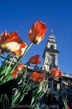 flower;flowers;garden;gardens;tulip;orange;tulips;historic;historical;architecture;flemish;clock-tower