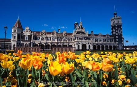 architecture;architect;Gingerbread-George;George-A-Troup;New-Zealand-Railways;Flemish-Renaissance-style;basalt;limestone;red-marseille-tiles;tower;towers;clock;Dunedins-moto-secundo-curo;Dunedins-Motto;secundo-curo;i-prosper-and-am-cautious;floor-panels;mosaic-tiles;historic;historical;history;flower;flowers;flowerbed;tulip;tulips