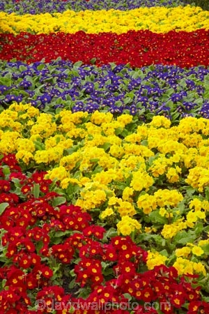 bloom;blooming;blooms;color;colorful;colors;colour;colourful;colours;council-gardens;Dunedin;Dunedin-Railway-Station;floral;flower;flower-bed;flower-beds;flower-garden;flower-gardens;flowers;fresh;Garden;gardens;grow;growth;N.Z.;New-Zealand;NZ;old;Otago;purple;red;renew;S.I.;season;seasonal;seasons;SI;South-Is;South-Is.;South-Island;Spring-Flowers;Sth-Is;yellow
