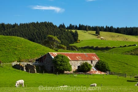 abandon;abandoned;agricultural;agriculture;animal;animals;barn;barns;Brighton;building;buildings;character;corrugated-iron;corrugated-metal;corrugated-steel;country;countryside;derelict;derelict-building;dereliction;deserted;desolate;desolation;destruction;domestic-stock;Dunedin;ewes;farm;farm-animals;Farm-Building;Farm-Buildings;Farm-Shed;Farm-Sheds;farming;farmland;farms;field;fields;herbivore;herbivores;herbivorous;heritage;historic;historic-building;historic-buildings;Historic-Ruins;historical;historical-building;historical-buildings;history;Kuri-Bush;livestock;lush;mammal;mammals;meadow;meadows;N.Z.;neglect;neglected;New-Zealand;NZ;old;old-fashioned;old_fashioned;Otago;outdoor;outdoors;outside;paddock;paddocks;pasture;pastures;roofing-iron;roofing-metal;ruin;ruins;run-down;rural;rustic;S.I.;Shearing-Shed;Shearing-Sheds;sheep;Sheep-Shed;Sheep-Sheds;SI;South-Is;South-Island;Sth-Is;stock;stone;stone-barn;stone-barns;stone-building;stone-buildings;stone-shed;Taieri-Mouth;tradition;traditional;vintage;white;Wool-Shed;Wool-Sheds;woolshed;woolsheds;zincalume