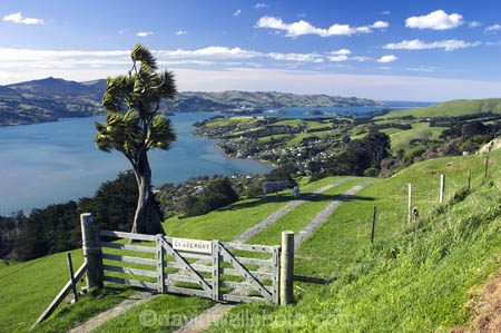 agricultural;agriculture;cabbage-tree;country;countryside;crop;crops;dunedin;farm;farming;farmland;farms;fence;field;fields;gate;gate-post;gates;grass;grazing;harbor;harbours;high;highcliff-road;hill;horticulture;lamb;meadow;meadows;new-zealand;otago-harbor;otago-harbour;otago-peninsula;paddock;paddocks;pastoral;pasture;pastures;rural;scenary;scenery;scenic;sheep;south-island;tree;trees;view
