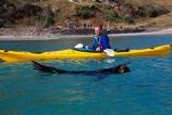 arctocephalus-forsteri;canoe;coast;harbor;interaction;kayaks;marine;nature;new-zealand;otago-peninsula;piltos-beach;wildlife