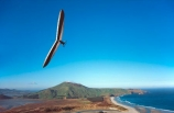 soar;fly;swoop;glide;allans-beach;hoopers-inlet;mt-charles;flying;gliding;glider;flyer;free;freedom;soaring;courage;alone;thrill;thrill_seeker;thrill-seeker;thrill-seeking;silence;wind;air;flight;individual;danger;risk;excitment;adventure;hang-gliding;hang_gliding;hang_glider;hangglider;hanggliding
