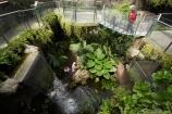 butterflies;butterfly;Discovery-World-Tropical-Forest;Dunedin;glass-bridge;museum;museums;N.Z.;New-Zealand;NZ;Otago;Otago-Museum;S.I.;SI;South-Is.;South-Island;Tropcial-Butterfly-House;tropical;waterfall;waterfalls