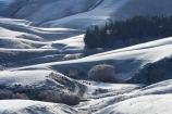 agricultural;agriculture;cold;country;countryside;farm;farming;farmland;farms;field;fields;freeze;freezing;frost;frosts;frosty;hard-frost;ice;icy;Lee-Stream;meadow;meadows;N.Z.;New-Zealand;NZ;Otago;paddock;paddocks;pasture;pastures;rural;S.I.;season;seasonal;seasons;SI;South-Is.;South-Island;Strath-Taieri;white;winter;wintery