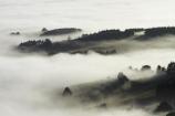 cloud;clouds;cloudy;Dunedin;fog;foggy;fogs;mist;mists;misty;monochromatic;monochrome;N.Z.;New-Zealand;NZ;Otago;Otago-Harbor;Otago-Harbour;Otago-Peninsula;S.I.;SI;South-Is.;South-Island;tree;trees;unusual-weather;weather