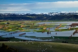 agricultural;agriculture;Allanton;animals;bad-weather;country;countryside;crop;crops;deluge;domestic-stock;Dunedin;extreme-weather;farm;farm-animals;farming;farmland;farms;field;fields;flood;flood-water;flood-waters;flooded-Taieri-River;flooding;floods;floodwater;floodwaters;high-water;horticulture;inundate;Maungatua;Maungatuas;meadow;meadows;Mosgiel;N.Z.;New-Zealand;NZ;on-flood;Otago;paddock;paddocks;pasture;pastures;river;rivers;rural;S.I.;sheep;shelter-belt;shelter-belts;shelter_belt;shelter_belts;shelterbelt;shelterbelts;SI;snow;snowy;South-Is;South-Is.;South-Island;Sth-Is;stock;swollen-river;Taieri;Taieri-Plain;Taieri-Plains;Taieri-River;Taieri-River-in-flood;The-Maungatua-Range;The-Maungatuas;water;weather;wet;wind-break;wind-breaks;wind_break;wind_breaks;windbreak;windbreaks;winter;wintery