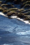 bad-water-quality;brook;brooks;cow-effluent;creek;creeks;dairy-effluent;dairy-pollution;dairy-runoff;discharge;drain;drainage-channel;drainage-channels;drainage-ditch;drainage-ditches;drains;Dunedin;emission;emissions;emit;environment;environmental;farm-runoff;global-warming;N.Z.;New-Zealand;NZ;Otago;pollute;polluted;polluted-water;polluting;pollution;poor-water-quality;riparian-area;riparian-areas;riparian-buffer;riparian-buffer-zone;riparian-buffer-zones;riparian-buffers;riparian-strip;riparian-strips;riparian-zone;riparian-zones;runoff;S.I.;SI;South-Is;South-Island;stream;streams;Taieri-Plain;Taieri-Plains;water;water-pollution;water-polutants;water-quality;watercourse;watercouses;watershed;watersheds;waterway;waterways