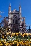 cathedral;church;Octagon;Dunedin;St-Pauls;St-Paul;St-Pauls;historic;building;clear-sky;sky;blue;yellow;tulip;tulips;flower;flowers;flowerbed;garden;spring;sun;sunny;bright;pray;prayer;wedding;stone;grey