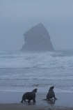 animal;animals;beach;beaches;bull;bulls;coast;coastal;coastline;coastlines;coasts;Dunedin;Hookers-Sea-Lion;Hookers-Sea-Lions;Hookers-Sea-Lion;Hookers-Sea-Lions;Lion-Rock;male;mammal;mammals;marine-mammal;marine-mammals;N.Z.;New-Zealand;New-Zealand-Sea-Lion;New-Zealand-Sea-Lions;NZ;ocean;oceans;Otago;Otago-Peninsula;Pacific-Ocean;Phocarctos-hookeri;S.I.;sand;Sandfly-Bay;sandy;sea;sea-lion;sea-lions;seas;shore;shoreline;shorelines;shores;SI;South-Is;South-Is.;South-Island;Sth-Is;water;wildlife