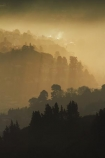 Botanic-Garden;Botanic-Gardens;Botanical-Garden;Botanical-Gardens;Dunedin;Dunedin-Botanic-Garden;Dunedin-Botanic-Gardens;Dunedin-Botanical-Garden;Dunedin-Botanical-Gardens;Dunedin-Gardens;Dunedin-North;fog;foggy;fogs;Leith-Valley;light;mist;mists;misty;N.Z.;New-Zealand;North-Dunedin;Opoho;Otago;S.I.;SI;South-Is;South-Island;Sth-Is;sunlight;tones