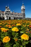 1906;architectural;architecture;bloom;blooming;blooms;building;buildings;clock;clock-tower;clock-towers;color;colorful;colors;colour;colourful;colours;council-gardens;Dunedin;Dunedin-Railway-Station;Flemish-Renaissance-style;floral;flower;flower-bed;flower-beds;flower-garden;flower-gardens;flowers;fresh;garden;gardens;George-A-Troup;Gingerbread-George;grow;growth;heritage;historic;historic-building;historic-buildings;historical;historical-building;historical-buildings;history;N.Z.;New-Zealand;NZ;old;orange;Otago;rail-station;rail-stations;railroad;railroads;railway;railway-station;railway-stations;railways;renew;S.I.;season;seasonal;seasons;SI;South-Is;South-Is.;South-Island;spring;Spring-Flowers;spring-time;spring_time;springtime;Sth-Is;tradition;traditional;train-station;train-stations;transport;transportation;yellow