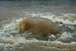 2015-flood;2015-South-Dunedin-floods;bad-weather;deluge;drainage-system;drains;Dunedin;extreme-weather;failing-infrastructure;flood;flood-water;flood-waters;flood_water;flood_waters;flooded;flooding;floods;floodwater;floodwaters;floow-waters;Forbury-Rd;Forbury-Road;high-water;in-flood;infrastructure;inundate;June-2015-floods;June-2015-South-Dunedin-Flood;N.Z.;New-Zealand;NZ;road;roads;S.I.;Saint-Clair;SI;South-Dunedin;South-Dunedin-Flood;South-Dunedin-flooding;South-Dunedin-floods;South-Is;South-Island;St-Clair;St.-Clair;Sth-Is;storm-water-drain;stormwater-drain;street;streets;urban;water;weather;wet