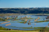 agricultural;agriculture;Allanton;bad-weather;country;countryside;crop;crops;deluge;Dunedin;extreme-weather;farm;farming;farmland;farms;field;fields;flood;flood-water;flood-waters;flooded-Taieri-River;flooding;floods;floodwater;floodwaters;high-water;horticulture;inundate;meadow;meadows;Mosgiel;N.Z.;New-Zealand;NZ;on-flood;Otago;paddock;paddocks;pasture;pastures;river;rivers;rural;S.I.;shelter-belt;shelter-belts;shelter_belt;shelter_belts;shelterbelt;shelterbelts;SI;South-Is;South-Is.;South-Island;Sth-Is;swollen-river;Taieri;Taieri-Plain;Taieri-Plains;Taieri-River;Taieri-River-in-flood;water;weather;wet;wind-break;wind-breaks;wind_break;wind_breaks;windbreak;windbreaks;winter;wintery