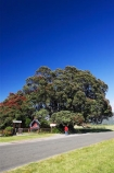 big;east-coast;Eastland;flower;flowers;gianhuge;gigantic;ginormous;metrosideros-excelsa;new-zealand;New-Zealands-largest;north-is.;north-island;pohutakawa;pohutukawa;pohutukawa-flower;pohutukawa-flowers;pohutukawa-tree;pohutukawa-trees;pohutukawas;Te-Araroa;tree;trees