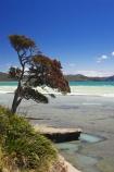 beach;beaches;coast;coastal;coastline;east-cape;east-coast;Eastland;new-zealand;north-is.;north-island;ocean;oceans;pohutukawa;pohutukawa-flower;pohutukawa-flowers;pohutukawa-tree;pohutukawa-trees;pohutukawas;sea;shore;shoreline;surf;Te-Araroa;tree;trees;wave;waves