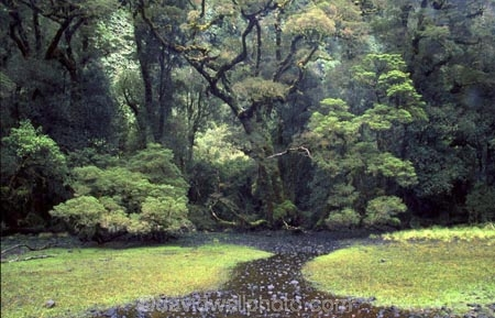 alive;beautiful;beauty;beech;bridge;brook;brooks;bubbling;bush;creek;creeks;dripping;fern;ferns;fiordland-national-park;flora;forest;forestry;forests;green;green,-tramp,-tramps,-tramping,;hike;hikes;hiking;lush;majestic;middle-earth;moss;mosses;natural;nature;rain-forest;rain-forests;rain_forest;rain_forests;rainforest;rainsforests;scene;scenic;south-west;southland;stream;streams;te-wahipounamu-south_west-new;tramp;tramping;tramps;verdant;walk;walking;walks;water
