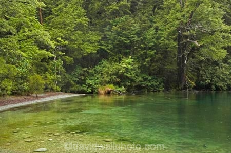 beautiful;beauty;Beech-Forest;bush;endemic;fiordland;Fiordland-N.P;fiordland-national-park;Fiordland-NP;forest;forests;green;lake;lake-gunn;lakes;lush-verdant;milford-road;n.z.;national-park;National-parks;native;native-bush;natives;natural;nature;new-zealand;Nothofagus;nz;rain-forest;rain-forests;rain_forest;rain_forests;rainforest;rainforests;S.I.;scene;scenic;SI;South-Island;South-West-New-Zealand-World-Her;southern-beeches;Southland;te-wahipounamu;te-wahipounamu-south_west-new;tree;trees;wood;woods;world-heirtage-site;world-heritage-area