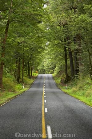 beautiful;beauty;Beech-Forest;bush;centre-line;centre-lines;centre_line;centre_lines;centreline;centrelines;driving;endemic;fiordland;Fiordland-N.P;fiordland-national-park;Fiordland-NP;forest;forests;glade;green;highway;highways;lush;milford-road;n.z.;national-park;National-parks;native;native-bush;natives;natural;nature;new-zealand;no-overtaking-line;no-overtaking-lines;no-passing-line;no-passing-lines;no_overtaking-line;no_overtaking-lines;no_passing-line;no_passing-lines;Nothofagus;nz;open-road;open-roads;rain-forest;rain-forests;rain_forest;rain_forests;rainforest;rainforests;road;road-trip;roads;S.I.;scene;scenic;SI;South-Island;South-West-New-Zealand-World-Her;southern-beeches;Southland;straight;te-wahipounamu;te-wahipounamu-south_west-new;timber;transport;transportation;travel;traveling;travelling;tree;tree-trunk;tree-trunks;trees;trip;trunk;trunks;verdant;wood;woods;world-heirtage-site;world-heritage-area;yellow-line;yellow-lines