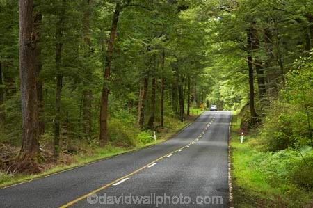 automobile;automobiles;beautiful;beauty;Beech-Forest;bush;car;cars;centre-line;centre-lines;centre_line;centre_lines;centreline;centrelines;driving;endemic;fiordland;Fiordland-N.P;fiordland-national-park;Fiordland-NP;forest;forests;glade;green;highway;highways;lush;milford-road;n.z.;national-park;National-parks;native;native-bush;natives;natural;nature;new-zealand;no-overtaking-line;no-overtaking-lines;no-passing-line;no-passing-lines;no_overtaking-line;no_overtaking-lines;no_passing-line;no_passing-lines;Nothofagus;nz;open-road;open-roads;rain-forest;rain-forests;rain_forest;rain_forests;rainforest;rainforests;road;road-trip;roads;S.I.;scene;scenic;SI;South-Island;South-West-New-Zealand-World-Her;southern-beeches;Southland;straight;te-wahipounamu;te-wahipounamu-south_west-new;timber;tranportation;transport;transportation;travel;traveling;travelling;tree;tree-trunk;tree-trunks;trees;trip;Trips;trunk;trunks;vehicle;vehicles;verdant;wood;woods;world-heirtage-site;world-heritage-area;yellow-line;yellow-lines