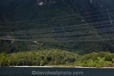 bush;electricity;electricity-distribution;electricity-line;electricity-lines;electricity-transmission;energy;Fiordland;Fiordland-N.P.;Fiordland-National-Park;Fiordland-NP;forest;forests;high-tension-lines;industrial;lak;Lake-Manapouri;lakes;line;lines;Manapouri;Manapouri-Power-Station;N.Z.;national-grid;national-park;national-parks;native-bush;native-forest;native-forests;native-tree;native-trees;native-woods;natural;nature;New-Zealand;NZ;power;power-cable;power-cables;power-distribution;power-line;power-lines;pylon;pylon-line;pylon-lines;pylons;S.I.;SI;South-IS;South-Island;Southland;Sth-Is;Te-Waipounamu;Te-Waipounamu-World-Heritage-Site;transmission-line;transmission-lines;tree;trees;UN-world-heritage-area;UN-world-heritage-site;UNESCO-World-Heritage-area;UNESCO-World-Heritage-Site;united-nations-world-heritage-area;united-nations-world-heritage-site;wire;wires;wood;woods;world-heritage;world-heritage-area;world-heritage-areas;World-Heritage-Park;World-Heritage-site;World-Heritage-Sites