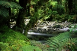 beauty;fern;ferns;middle-earth;native-bush;natural;nature;new-zealand;scene;scenic;south-west;southland;streams;te-wahipounamu-south_west-new-zealand-world-hertitage-area