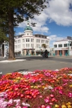 A-amp;-B-Building;A-and-B-Buidling;Art-Deco;Art-Deco-Architecture;Art-Deco-Building;Art-Deco-Buildings;Art-Deco-Capital-of-the-World;art-deco-period;Art-Deco-Style;Art-Deco-Trust;bright;colorful;colourful;flower;flower-bed;flower-beds;flower-garden;flower-gardens;flowerbed;flowerbeds;flowers;Hawkes-Bay;Hawkes-Bay;Marine-Parade;N.I.;N.Z.;Napier;Napier-Waterfront;New-Zealand;NI;Norfolk-Pine;Norfolk-Pines;North-Is;North-Is.;North-Island;NZ;osteospermum;osteospermums;public-garden;public-gardens;season;seasonal;seasons;spring;springtime