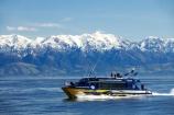 alp;alpine;alps;altitude;catarmaran;cetacean;cetaceans;high-altitude;kaikoura;kaikoura-canyon;kaikoura-ranges;marlborough;mount;mountain;mountain-peak;mountainous;mountains;mountainside;mt;mt.;new-zealand;ocean;pacific-ocean;peak;peaks;Physeter-macrocephalus;range;ranges;sea;seaward-kaikoura-ranges;snow;snow-capped;snow_capped;snowcapped;snowy;south-island;sperm-whale;sperm-whales;summit;summits;tourism;tourist;tourists;travel;traveler;traveling;traveller;travelling;whale;whale-watch-kaikoura;whale-watching