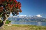 coast;coastal;coastline;coastlines;coasts;flower;flowers;Kaikoura;Kaikoura-Coast;Marlborough;metrosideros-excelsa;N.Z.;New-Zealand;NZ;ocean;oceans;Pacific-Ocean;plant;plants;pohutakawa;pohutakawas;pohutukawa;pohutukawa-flower;pohutukawa-flowers;pohutukawa-tree;pohutukawa-trees;pohutukawas;S.I.;sea;Seaward-Kaikoura-Range;Seaward-Kaikoura-Ranges;shore;shoreline;shorelines;shores;SI;South-Island;tree;trees;water