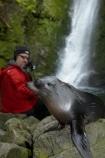 animals;Arctocephalus-forsteri;babies;baby;baby-fur-seal;baby-fur-seals;cub;cubs;Fur-Seal;fur-seal-cub;fur-seal-cubs;Kaikoura;Kaikoura-Coast;Kaikoura-Coastanimal;kekeno;male;mammal;mammals;man;marine;Marlborough;N.Z.;native;natural-history;nature;New-Zealand;New-Zealand-Fur-Seal;NZ;NZ-Fur-Seal;ocean;Ohau-Point-Seal-Colony;Ohau-Stream;Ohau-Stream-Waterfall;people;person;S.I.;sea;seal;seals;SI;South-Is;South-Island;Sth-Is;tourism;tourist;tourists;water;waterfall;waterfalls;wildife