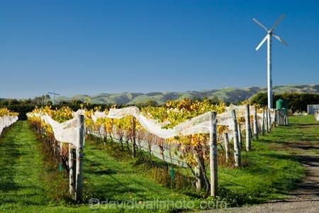 agricultural;agriculture;autuminal;autumn;autumn-colour;autumn-colours;autumnal;color;colors;colour;colours;country;countryside;crop;crops;cultivation;deciduous;fall;farm;farming;farmland;farms;field;fields;grape;grapes;grapevine;horticulture;leaf;leaves;Margrain-Vineyard;Margrain-Vineyards;Margrain-Wines;Martinborough;Martinborough-Wineries;Martinborough-Winery;N.I.;N.Z.;New-Zealand;NI;North-Island;NZ;orange;row;rows;rural;season;seasonal;seasons;tree;trees;vine;vines;vineyard;vineyards;vintage;Wairarapa;wine;wineries;winery;wines;yellow