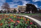 The-Square;square;Palmerston-North;palmerston;flower;flowers;flower-garden;manawatu;north-island;city;cities