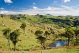 agricultural;agriculture;cabbage-tree;cabbage-trees;country;countryside;farm;farming;farmland;farms;field;fields;irrigation-dam;irrigation-dams;meadow;meadows;N.I.;N.Z.;New-Zealand;NI;North-Island;NZ;paddock;paddocks;pasture;pastures;pond;ponds;pool;pools;reservoir;reservoirs;rural;sheep;stock;Wairarapa