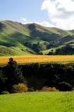 agricultural;agriculture;autuminal;autumn;autumn-colour;autumn-colours;autumnal;color;colors;colour;colours;country;countryside;crop;crops;cultivation;deciduous;fall;farm;farming;farmland;farms;field;fields;grape;grapes;grapevine;horticulture;leaf;leaves;Martinborough;Martinborough-Masterton-Road;Martinborough-Wineries;Martinborough-Winery;N.I.;N.Z.;New-Zealand;NI;North-Island;NZ;orange;row;rows;rural;season;seasonal;seasons;Springrock-Vineyard;Springrock-Vineyards;Te-Kairanga;Te-Kairanga-Vineyard;Te-Kairanga-Vineyards;Te-Kairanga-Wines;tree;trees;vine;vines;vineyard;vineyards;vintage;Wairarapa;Whangaehu-Valley;wine;wineries;winery;wines;yellow