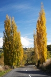 autuminal;autumn;autumn-colour;autumn-colours;autumnal;bend;bends;Central-North-Island;Central-Plateau;centre-line;centre-lines;centre_line;centre_lines;centreline;centrelines;color;colors;colour;colours;corner;corners;deciduous;driving;fall;leaf;leaves;N.I.;N.Z.;New-Zealand;NI;North-Island;NZ;open-road;open-roads;poplar;poplar-tree;poplar-trees;poplars;Rangitikei-District;Rangiwaea-Junction;road;road-trip;roads;Ruapehu-District;season;seasonal;seasons;transport;transportation;travel;traveling;travelling;tree;trees;trip;Waiouru