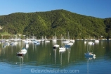 boat;boats;calm;calmness;fishing-boats;harbor;harbors;harbour;harbours;hull;hulls;launch;launches;marina;marinas;Marlborough;Marlborough-Sounds;mast;masts;moor;mooring;moorings;New-Zealand;peaceful;peacefulness;Picton;port;ports;Queen-Charlotte-Sound;reflection;reflections;sail;sailing;South-Island;still;stillness;tranquil;tranquility;Waikawa;Waikawa-Bay;yacht;yachts