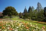 Blenheim;bloom;blooming;blooms;Botanic-Garden;Botanic-Gardens;Botanical-Garden;Botanical-Gardens;flower;flowers;fresh;grow;growth;Marlborough;N.Z.;New-Zealand;NZ;Pollard-Park;poppies;renew;S.I.;season;seasonal;seasons;SI;South-Is.;South-Island;spring;springtime